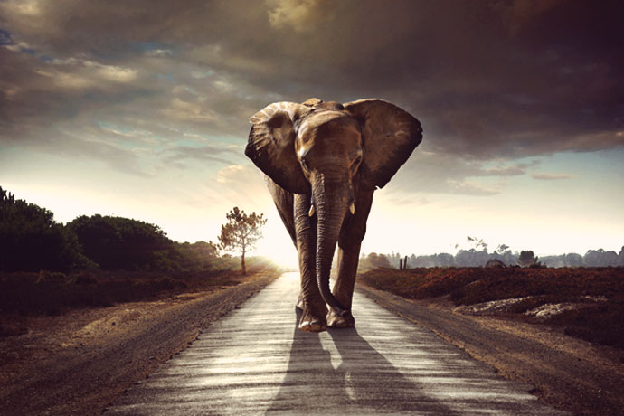The Elephant Mindset The Elephant Mindset